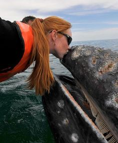 That must be THE LUCKIEST girl in the world! I'm in such envy right now!!! To kiss a humpback whale would be the most amazing moment in life.