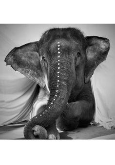 Love Warriors Adele Plakat i gruppen Plakater / Fotokunst hos Desenio AB Animals And Pets, Baby Animals, Cute Animals, Beautiful Creatures, Animals Beautiful, Elephas Maximus, Wal Art, Elephants Never Forget, Foto Poster