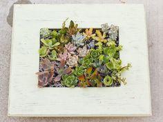 Finished Succulent Living Frame
