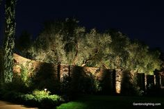 Grazed walls and uplit trees