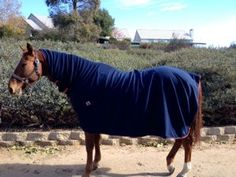 Horse Coolers 101~  all you need to know!   http://www.proequinegrooms.com/index.php/tips/equipment-and-tack/the-basics-of-coolers/