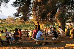 Chef Drew Deckman's restaurant in its outdoor setting under the trees at the El Mogor ranch and winery. Baja California, Places To Travel, Places To Visit, New York Times Magazine, Travel Channel, Grand Tour, Travel Memories, Historical Sites, Wine Country