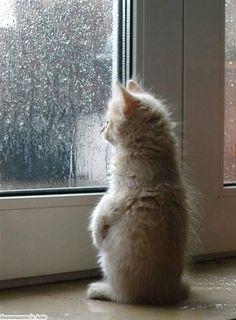 Talvolta per essere felici basta guardare dalla finestra il cielo che si scioglie #joy #semplicity #cat #likes