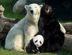 How panda's are made