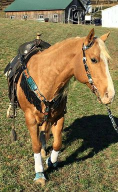 Tack in action pic, custom ordered tack set
