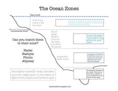Here's a nice printable on the ocean zones. Answer key can be found at: http://2.bp.blogspot.com/-Gl8YyvNjqN8/UTn4awkln6I/AAAAAAAACvU/FSgL-HSO7sU/s1600/0001DM.jpeg