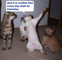 lolcats | lolcats - lol-cats Photo
