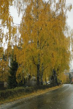 the Autumn colors Norway, Country Roads, Autumn, Explore, Beautiful, Colors, Fall, Exploring