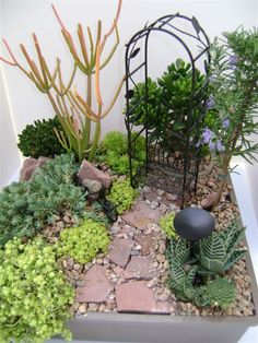 Click through for a do it yourself Fairy Garden Design. This one is called Savvy Succulent Hideaway! It features a hobbit succulent, firesticks succulent, blue spruce stone crop, baby jade, gater aloe, cobweb buttons, rosemary and more!