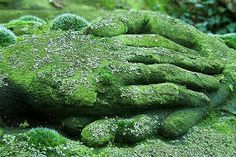 Image shared by Saira. Find images and videos about nature, green and hands on We Heart It - the app to get lost in what you love. Such Und Find, Quiet Storm, Shades Of Green, Garden Art, Topiary Garden, Garden Cottage, Garden Sculpture, Stone Sculpture, Sculpture Art
