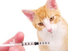 The Vaccination Conundrum - Protocols for Cats Vaccines How Do Cat Vaccines Work, and Which are Necessary?