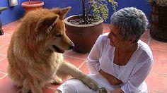 día masaje estilo perrito en alcorcón
