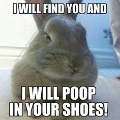 17 Most hilarious quotes and Funny Animal Memes - Funny Animal Quotes - - 17 Most hilarious quotes and Funny Animal Memes The post 17 Most hilarious quotes and Funny Animal Memes appeared first on Gag Dad. Cute Baby Bunnies, Funny Bunnies, Cute Funny Animals, Cute Baby Animals, Funny Cats, Fun Funny, Super Funny, Funny Animal Quotes, Funny Animal Pictures