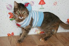 cats, sailor costum, costumes, kitti sailor, pet, knit costum, sailors, cat coutur, dapper cat