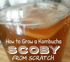 kombucha   Flower Child From Scratch Kombucha Scoby, Coffee Kombucha, How To Make Scoby, Scoby Hotel, Fermented Tea, Water Kefir, Lactose Free, Preserving Food, Egg Free