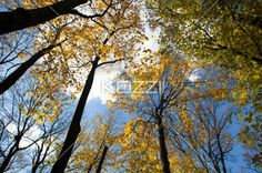 view of trees. - Low angle view of tree.