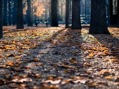 Park, Park, Trees, Shadows, Autumn, Fallen #park, #park, #trees, #shadows, #autumn, #fallen