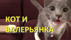 Котенок и валерьянка или попытка приучить кота к когтеточке