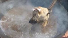 Petizione · Governor of Yulin xi provence nt of the republic of China Stop the Yulin dog/cat meat eating festi: STOP this barbaric dog/cat torture skinned and boiled alive and then beaten to death · Change.org