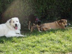 Dgena, Chanel et Bella