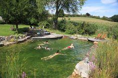 Schwimmteich im Garten.