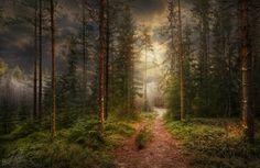 The Forest by Ditte Søndergaard Iversen on 500px