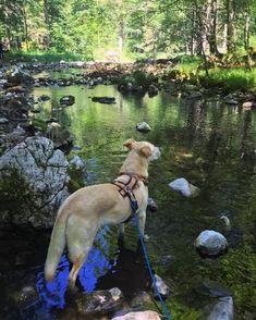 Einmal rund um die Langbathseen, bitte!   Wiederunterwegs.com Dogs, Animals, You're Welcome, Round Round, Animales, Animaux, Pet Dogs, Doggies, Animal