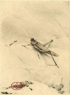 Grasshopper and Ants by Edward Julius Detmold