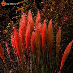 Cele mai bune plante care combat problemele sexuale masculine   terasaandreea.ro