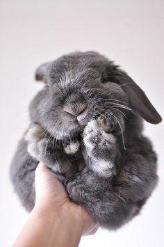 ahh! fluffy bunny!