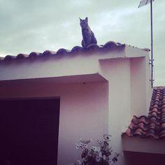 La gata sobre el tejado, observando la calle