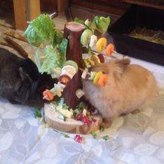 Der neue Futterbaum für meine Lieblinge #futterbaum #kaninchen #futter #beschaeftigung #bunny #handmade #foddertree