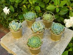 Special Listing for Erin 80 Succulent Wedding Favors, Rustic Wedding Favor, Fall Wedding Favor, Garden Party Favor, Mini Pail Succulent. $240,00, via Etsy.