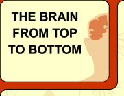 Interactive Web Site... Everything you ever wanted to know about your Brain...