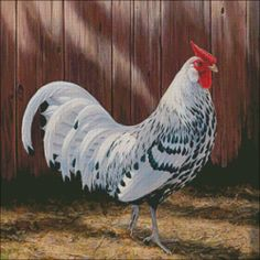 Rooster Silver Spangled Hamburg Chicken  Counted Cross Stitch Pattern