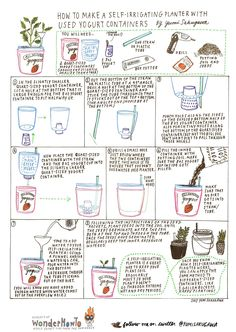 How to Make a Self-Irrigating Planter with Yogurt Containers « The Secret Yumiverse