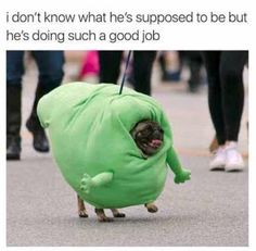 38 90's Memes Pictures That Will Blow Your Mind Today | MemesPanda Funny Black Memes, Funny Dog Memes, Funny Animal Memes, Funny Animal Pictures, Cute Funny Animals, Funny Cute, Bad Day Funny, Funny Pics, Memes Humor