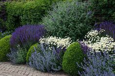 Mixed herbaceous border Mixed herbaceous border The post Mixed herbaceous border appeared first on Vorgarten ideen. Garden Shrubs, Shade Garden, Back Gardens, Outdoor Gardens, Small Front Gardens, Garden Wallpaper, Flower Bed Designs, Herbaceous Border, Garden Borders