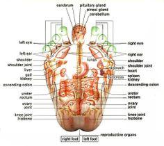 reflexology | Foot Reflexology Improves my Health and Press Away My Pain | Miss ...