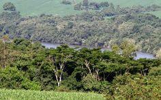 Meio Ambiente apresenta andamento do inventário florestal do Paraná