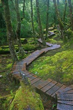 Wonderful Secret Garden Pathway Design Ideas For Backyard - Moss Garden, Garden Paths, Garden Bridge, Hill Garden, Landscape Architecture, Landscape Design, Garden Design, The Secret Garden, Secret Gardens