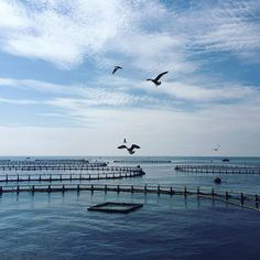 #Photo @ montseferre #ametllademar #ametllamar #terresdelebre #tarragona #catalunya #catalogne #cataluña #catalonia #pesca #fishing #pêche #platja #playa #plage #beach #estiu #verano #été #summer #sun #vacances #vacaciones #holiday #traveling #viajes #travel #visit #eatheword #vamosdeviaje #voyage #escapadas #experiences #traveller #food #gastronomia #gastronomy #happyholidays #mediterrani #mediterraneo #mediterranean #visiting #vacation #trip #tourism #tourist #reservadelabiosfera