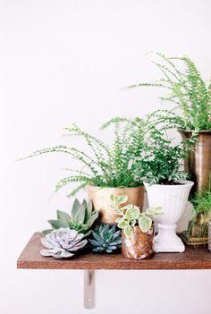 stylemepretty_succulents
