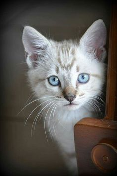 #TrendingNow on pin feed are so many dogs & cats ... 02/16/2018 We love them! Thanks to original pinner for this sweet, blue-eyed kitten. :)