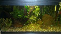 Aquarium eenvoudig ingericht