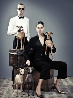 Billionaire Club / karen cox. The Glamorous Life. Italian Grayhounds