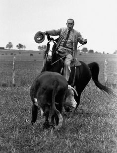 1964 -- Lyndon Johnson --   President Lyndon Johnson proves he's a pretty good cowhand as he puts his horse, Lady B, through the paces of rounding up a Hereford yearling on his LBJ Ranch near Stonewall, Texas, on November 4, 1964. (AP Photo/Bill Hudson)