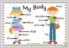 body part images for kids | ENGLISH KIDS FUN: Parts of the body wordsearch