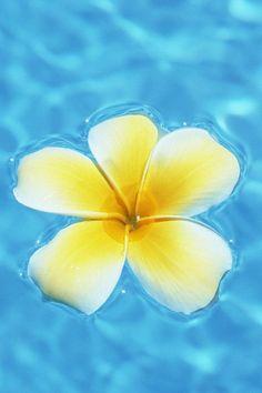 Tropical flower floating in water