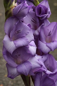All sizes | Gladiolus spike #2 | Flickr - Photo Sharing!